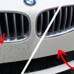 Jak se zbavit otravného hmyzu z vašeho miláčka? - čisticí prostředky - ekoGRADO